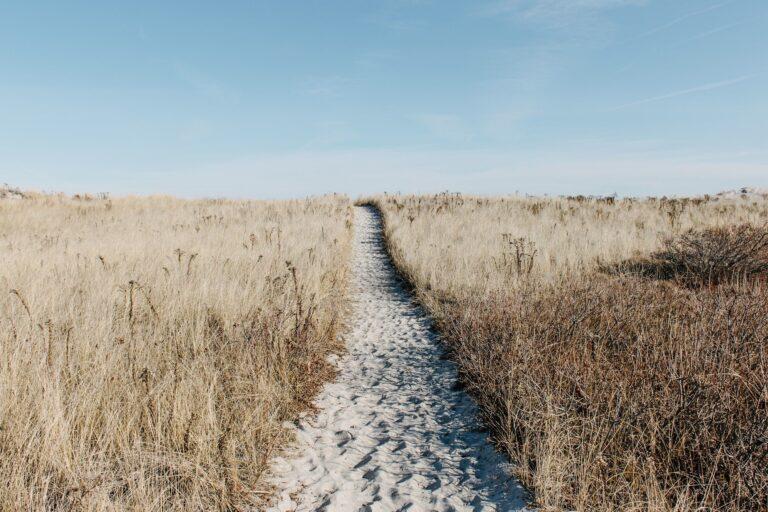 Poema: La vida del peregrino